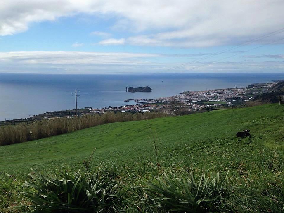 Paisagem e vaca - Açores