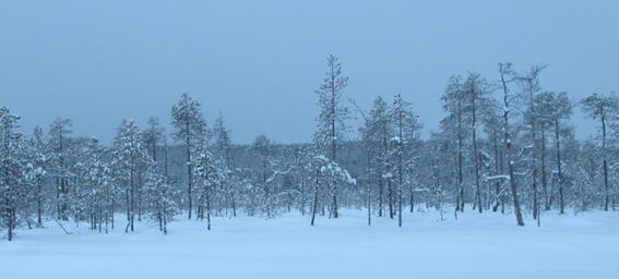 Férias em Rovaniemi na Lapónia