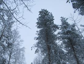 Floresta em Rovaniemi