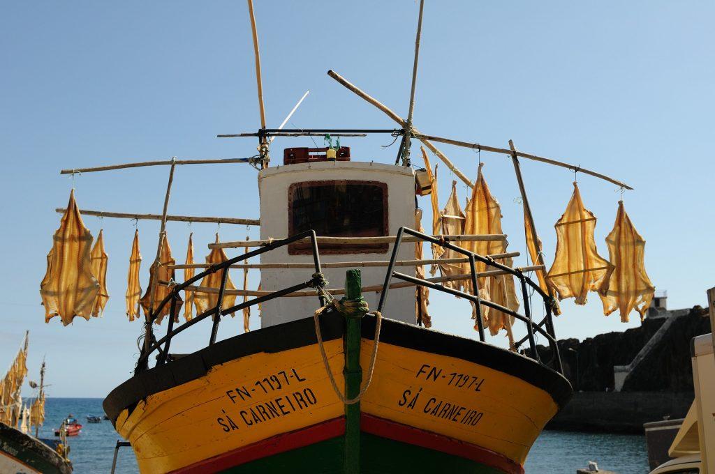 Secagem do tubarão gato no barco Sá Carneiro - Madeira\